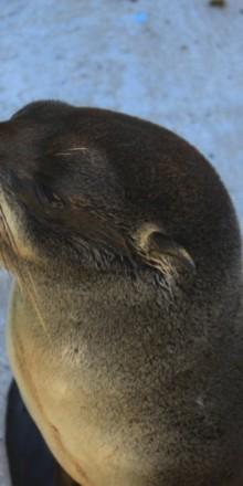 Sos Rescate Fauna Marina